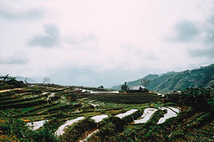 Ruong Bac Thang Lao Cai (mero_dnt) Tags: vietnam laocai travel trekking hiking landscape field green nature