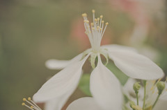 Deep in their roots, all flowers keep the light. Theodore Roethke Read (LornaTaylor) Tags: 50mm copyright2017lornataylor freelensing greenlandgardencenter lensbender lornataylor lornataylorphotography nikon taylorimagesca bokeh flowers lensflare