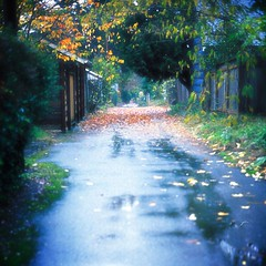 Northeast Portland in the Rain (idintify media) Tags: idintifymedia photography image art fineart nashville color 35mm minolta x570 film banner desktop stock free mystery suspense fiction magic haunting supernatural portland oregon alberta albertaartsdistrict lastthursday rain fall season autumn red blue yellow green reflection mirror pond pool puddle water tree grass bush forest rural urban street city town alley alleyway fence garage shed road pavement leaf leaves fallen fuji kodak analog