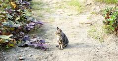 🐈 (benji112358) Tags: cat malaysia sunny purrfect