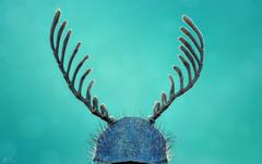 Haplomalachius Flabellatus (Can Tunçer) Tags: can cantunçer cantuncer canon6d canon closer macro makro macros macrophotography micro mikro makros microscop microscope mitutoyo mitu5x tunçer turkey turkiye türkiye tuncer tabletop stack stacking studio setup sinek
