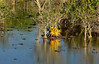 Espelho de cores (Márcia Valle) Tags: mangue mangrove manguezal caravelas bahia brasil brazil márciavalle nikon d5100 colors cores coresdobrasil tropical habitat faunabrasileira brazilianfauna bromélia aechmea bromeliad