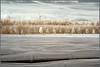 2017 04 14 Spargelernte Lehnin - 08 (Mister-Mastro) Tags: ernte lehnin spargel asparagus harvest brandenburg germany deutschland ir infrared folie foil christo