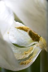 pollen (repaap) Tags: elichrome quadra