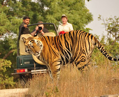 ranthambore (Top Indian Holidays) Tags: goldentriangletourwithranthambore goldentrianglewithranthamboretour goldentrianglewithranthambore