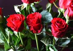 DSC_4721 (PeaTJay) Tags: nikond750 reading lowerearley berkshire macro micro closeups gardens indoors nature flora fauna plants flowers bouquet rose roses rosebuds