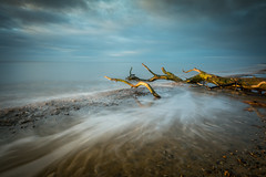 Withdrawl (Nick Seaman Photos) Tags: suffolk covehithe sony