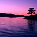 18 - Artistic - Purple (in explore) (Stu-In-Norway) Tags: norway rogaland stavanger stuinnorway vaulen sunrise water waterfront dogwood dogwood2017 dogwood52 dogwoodweek18 purple