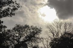 Atardecer entre árboles.NWN (melamasso) Tags: nwn martesdenubes atardecer