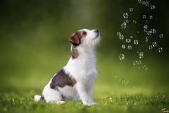 Il cacciatore di sogni (LightRapsody) Tags: cane bolle di sapone verde sogni dog soap