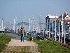 Bispham... walking the dogs (deltrems) Tags: blackpool lancashire fylde coast promenade bispham poles traction man dogs dogwalker dog walker