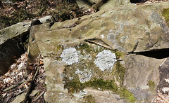 Rock face?! (Gillian Floyd Photography) Tags: rock moss lichen face