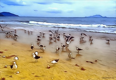 A beautiful day (♣Cleide@.♣) Tags: © ♣cleide♣ brazil 2017 photo art digital ps6 texture painting seascape beach birds artdigital exotic netartii sotn awardtree