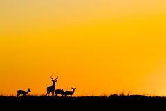 Lever du soleil (sunrise) - Masai Mara (mariepascale mapa) Tags: soleil du lever safari nature kenya afrique masaimara faune sauvage ciel