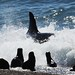 Para más información: www.casamerica.es/cine/el-faro-de-las-orcas
