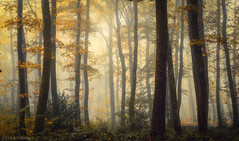 Foggy place! (pat.thom974) Tags: trees autumn fog