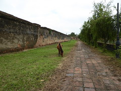 Hue - Ancient Capital of Vietnam (rylojr1977) Tags: hue vietnam captial ancient ornate architecture gardens culture animal pony