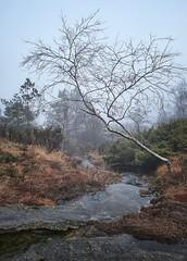 Mist, Norway (Vest der ute) Tags: xt2 norway rogaland haugesund djupadalen tree river water mist fog haze grass fav25 fav200