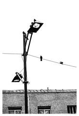 (roozbeh bornak) Tags: contact photo photography lightroom light birds bird nikkor 50mm nikon bnwphotography bnw tehran iran streetphotography