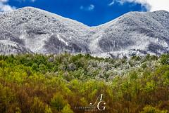 Clash of Seasons (TranceVelebit) Tags: croatia lika velebit mountain mountains forest beech snow snowy green white weather seasons spring winter meet clash