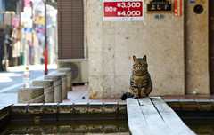 cat (NEKOFighter) Tags: cat neko nikon japan ねこ 猫 大分 別府 商店街 straycat