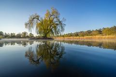 Morning in the Lake Valley (Jannik Peters) Tags: tree fog bird willow wheeping voigtländer 12 12mm sony a7 fe