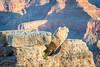 DSC_2239.jpg (RiverBum - MN) Tags: estrella whitetank grandcanyon phoenix springbreak arizona