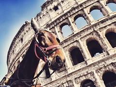 Roma (Japo García) Tags: colosseo coliseo arquitectura caballo carroza paseo turismo visitar ciudad roma italia monumento viajar fotografía calesa