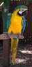 Happy Birthday to Me (LimpingFrog Productions) Tags: johncarkeet birthday april19 2017 sarasota bradenton sarasotagardenclub sarasotajunglegarden desotonationalmemorial annamariaisland cake bird skywaybridge gulfofmexico beach sand sun turtle flamingo parrot snake alligator fish desoto expedition nationalpark memorial birds lake swamp walk owl hawk seagull armor helmet conquistador carrotcake cross lizard stfrancisofassisi rocks shore boats trees monument fountain japanesegarden