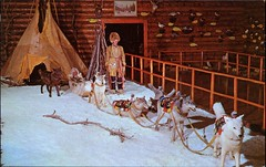 Dog Team, Luxton Museum, Banff, Alberta (SwellMap) Tags: postcard vintage retro pc chrome 50s 60s sixties fifties roadside midcentury populuxe atomicage nostalgia americana advertising coldwar suburbia consumer babyboomer kitsch spaceage design style googie architecture waxmuseum effigy figurine