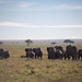 Gentle Giants of the Serengeti