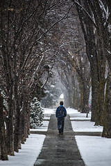 A Younger Me (Mister Day) Tags: trees street solitary spring winter
