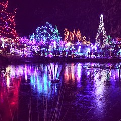 Reflections #lights #christmas #garden #lake #water #reflection #night #coloured (lilylabphotography) Tags: lights christmas garden lake water reflection night coloured