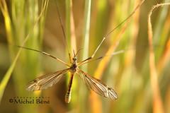 t'as de beaux yeux tu sais (studio gimi) Tags: insecte outdoor extérieur grosplan planrapproché depthoffield macro marais sigma105mm sigma