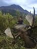 Alaska Moose and Bear Hunt - Dillingham 45