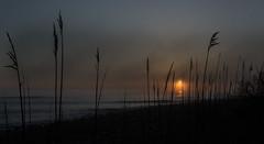...sunrise in Rye... (jamesmerecki) Tags: sunrise rye nh newhampshire morning seacoast coast atlantic ocean newengland colors fog grass silhouette seascape