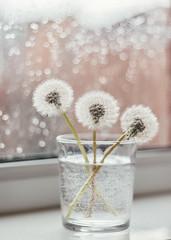 (alina trifan) Tags: dandelions flower flowers alinatrifan stilllife