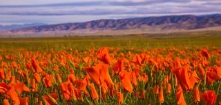 California Springtime!