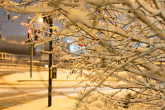 20130120-4324.jpg (peta.ryb) Tags: snow london coffee greenwich january footprints motorbike harleydavidson sledding sledges northgreenwich greenwichpark canningtown o2arena