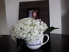 ** Genevive...et la fleur d'hydrange...** (Impatience_1(Si site non OK...Y suis moins)) Tags: flower fleur photo m niece bouquet genevive impatience nice coth snoopycup fleurdhydrange coth5 tassesnoopy