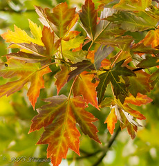 Cool Changes (Rick Smotherman) Tags: wood trees summer stpeters nature leaves canon garden outdoors 50mm morninglight backyard august 7d canon7d