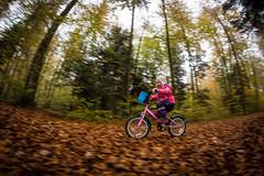 IMG_5555.jpg (blubberli) Tags: pink orange schweiz lily laub herbst gelb grn braun wald aargau velo fahrrad weg mitzieher waldweg knten