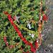 Trees_of_Loop_360_2013_068