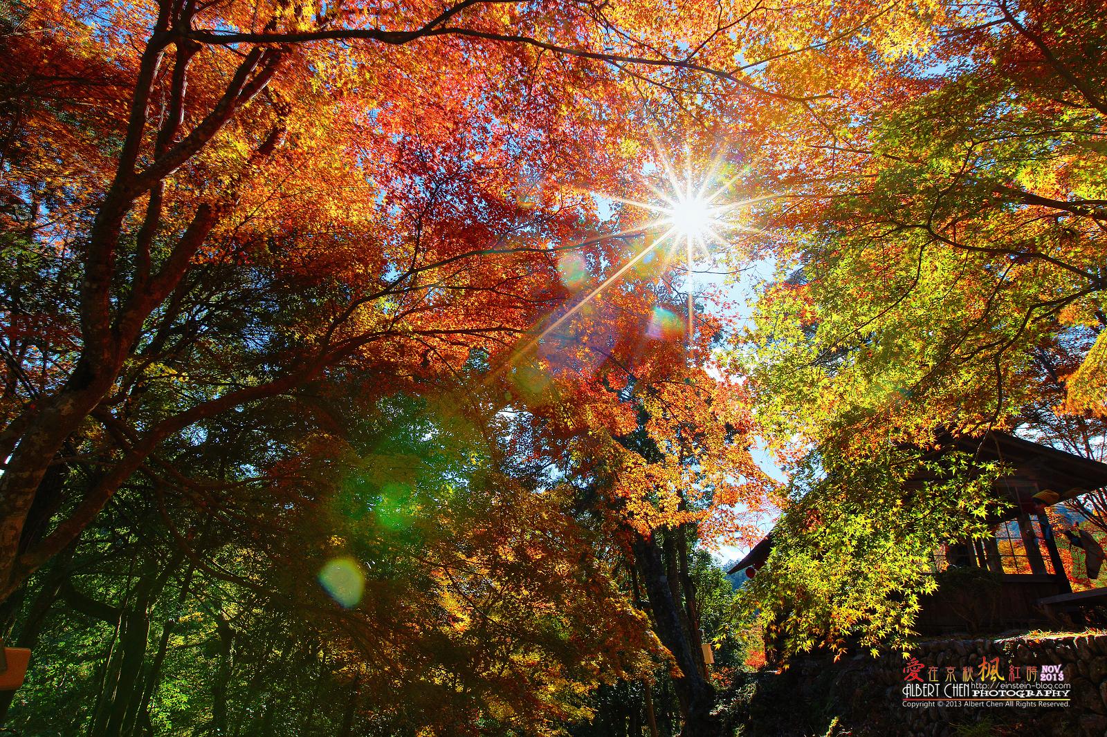 2013-11-19 11.00.21IMG_0236r