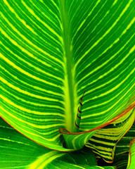 Cool leaf (punahou77) Tags: plant canada green niagarafalls waterfall leaf landmark