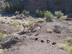 Crack in the Mountain Trail (saguarostrength) Tags: arizona lakehavasucity slotcanyon sarapark crackinthemountain