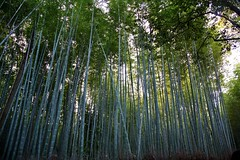 IMG_8766 (JuhaOnTheRoad) Tags: japan forest kyoto asia bamboo arashiyama