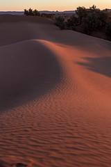 True desert 2 (Ryoushi no syokubutsuen) Tags: art sahara nature landscape desert arabic berber marocco marrakech magrib almagrib medrassa