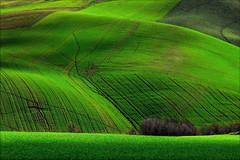 green (Luigi Alesi) Tags: italy verde green landscape nikon scenery italia raw country campagna fields marche paesaggio macerata campi d90 cantagallo pollenza mygearandme mygearandmepremium mygearandmebronze mygearandmesilver mygearandmegold mygearandmeplatinum mygearandmediamond