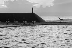 Hollowback (Leighton Wallis) Tags: pool yoga clouds sunrise newcastle dawn waves seagull sony australia nsw newsouthwales pancake alpha 16mm f28 headstand oceanbaths mirrorless a7r ilce7r